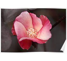 Peppermint Petals Poster