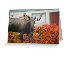 neighborhood moose... Greeting Card