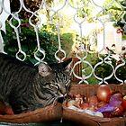 BO BO - Let me in... by Nira Dabush