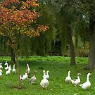 Geese and autumn  by steppeland
