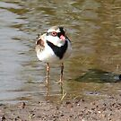 Black- Fronted Dotterel by Rick Playle