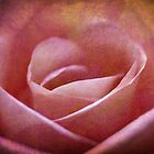 Paper Rose by Astrid Ewing Photography