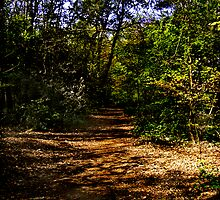 Beech Walk by David's Photoshop