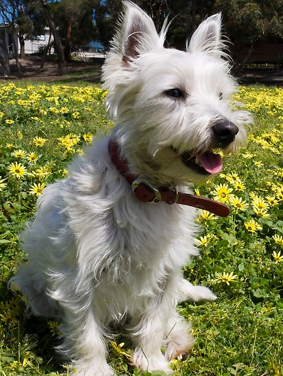 Bella loves Spring by Pascal Inard