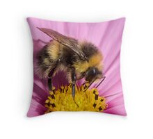 Bumble bee - Bombus lucorum Throw Pillow