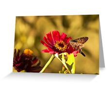Moth on Red Daisies Greeting Card