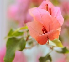 Bougainvillea Floral by Jessica Jenney