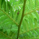 Fern by Framed-Photos