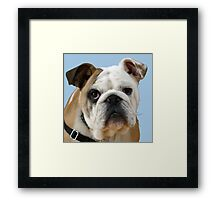 American Bulldog Background Removed Framed Print