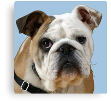 American Bulldog Background Removed Canvas Print