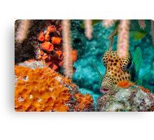 Trunk Fish Canvas Print