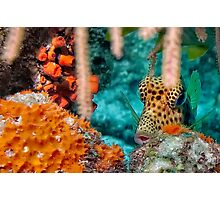 Trunk Fish Photographic Print