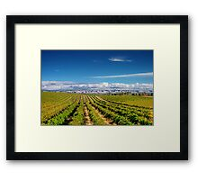 Mclean Vineyard Framed Print