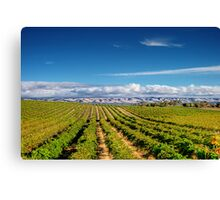 Mclean Vineyard Canvas Print