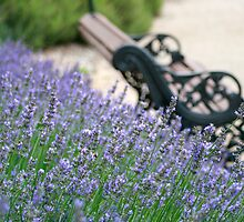 Lavender Bench by Kelvin  Wong