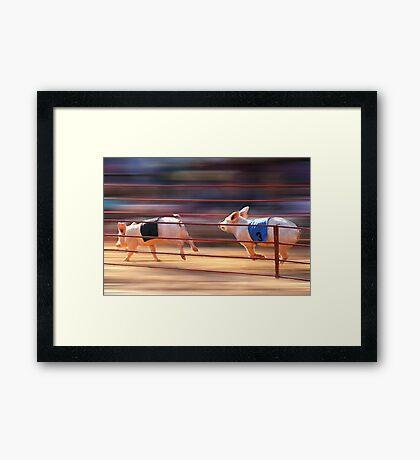 Pig Racing Framed Print