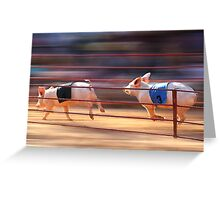 Pig Racing Greeting Card