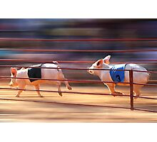 Pig Racing Photographic Print