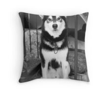 Greeks shoot dogs for trespass y'know!...... Throw Pillow