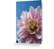 Baby Pink in a Blue Sky Greeting Card