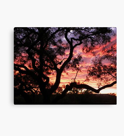 Old Mesquite II Canvas Print
