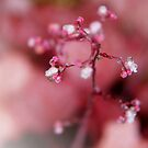 Pink Rain by Stephanie Hillson