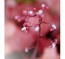 Pink Rain Photographic Print