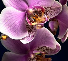 Simply Orchids by Jacky Parker