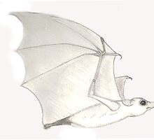 A bit batty by harriet7