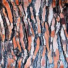 Anatomy of a Tree Bark by Ralph Angelillo