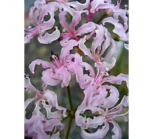 Frilly Photographic Print