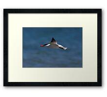 Fleeting Tern Framed Print