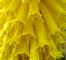Fluffy Yellow No.3 by Orla Cahill Photography