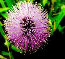 Grass Flower by myrbpix