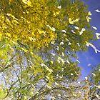 Autumn Poetry (September) by Sofia Solomennikova