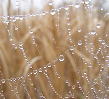 Dewdrops on Spiderweb by elasita