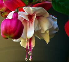Soft Focus White Beauty by Bryan D. Spellman