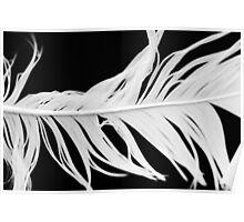 Soft feather Poster