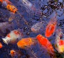 The Abstract Beauty of Koi by Kate Purdy