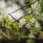 Spring Green by AbigailJoy