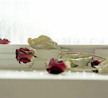 Roses by Lindsey Van Nuil