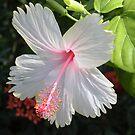 Pale Pink Flower by Ocean1111