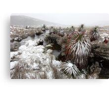 Pandini, Cradle Mountain National Park, Tasmania, Australia Canvas Print