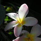 flower reaching for the sunshine by Ocean1111