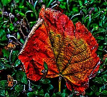 Autumn Leaves Fine Art Print by stockfineart