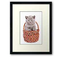 Funny gray kitten in a basket Framed Print
