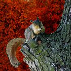 Squirrel In Autumns Tree -Solved, TWTArtAndDesign by Linda Miller Gesualdo