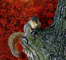 Squirrel In Autumns Tree -Solved, TWTArtAndDesign by Linda Miller Gesualdo