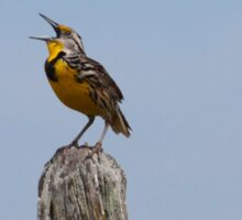 Eastern Meadowlark  Sticker