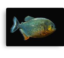 Piranha! Canvas Print